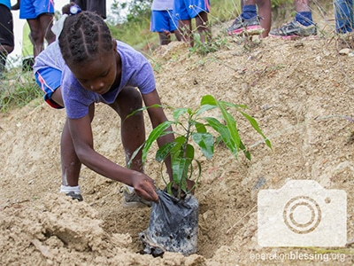 A girl planting trees in Haiti.